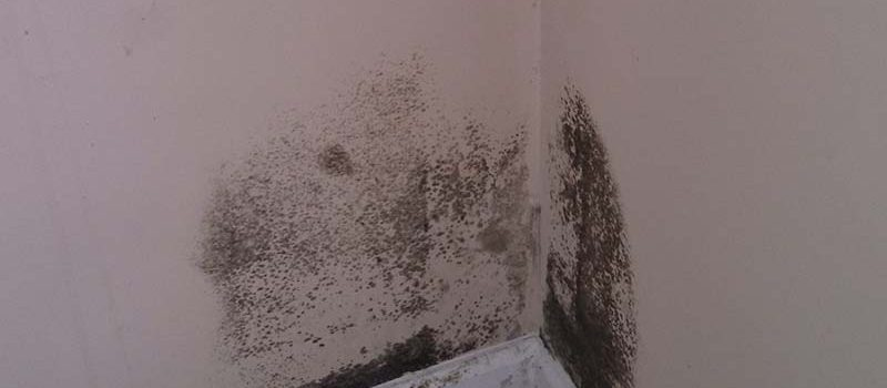 mold-in-corner-courtesy-of-mold-hold