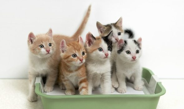 multiple-cats-need-multiple-litter-boxes